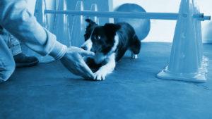 pavimenti agility dog
